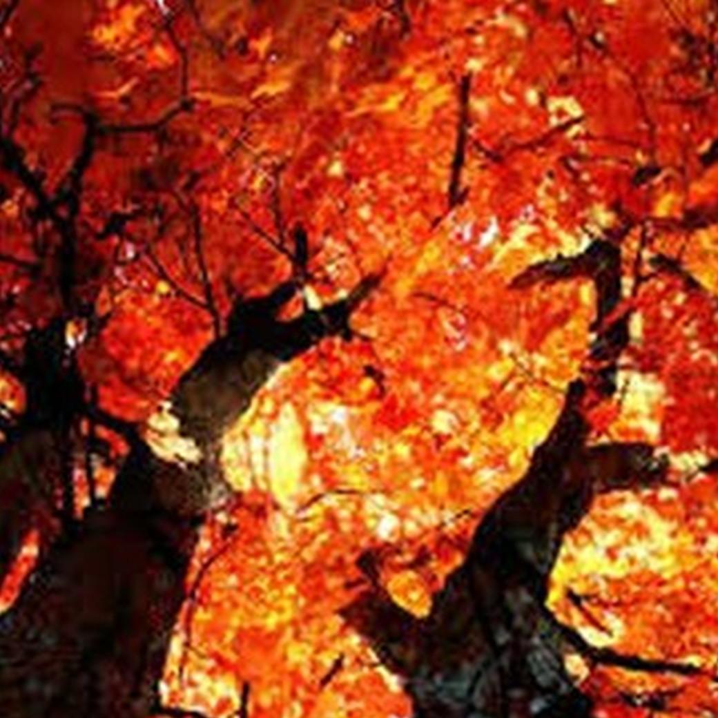 arancione_foto