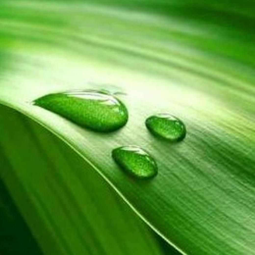 verde_foto